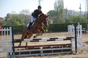 1er salon du cheval en Vendée au Complexe sportif des Terres Noires les 27,28 et 29 avril
