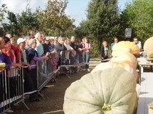 La Mothe Achard: concours national du plus gros potiron et fête de la citrouille le dimanche 5 octobre