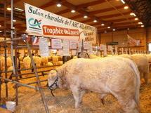Salon charolais de l'Arc Atlantique :  fin ce samedi à La Roche-sur-Yon