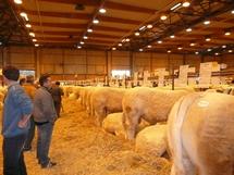 Salon du charolais de l'Arc Atlantique :  le palmarès de l'édition 2 008 de La Roche-sur-Yon