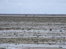 Electricité : le vent tourne en Vendée