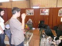Exposition canine samedi et dimanche à La Roche-sur-Yon aux Oudairies.