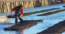 Le site ostréicole le plus petit de France se trouve en Vendée