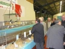 L'aviculture à l'honneur du 30 octobre au 1°novembre à Challans