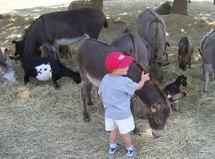 Découvrez les plaisirs de la ferme en Vendée