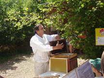 La fête du miel en Folie les 20 et 21 juillet  de 10h30 à 19h