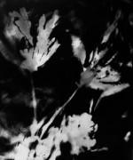 """L'exposition """"TERRA INCOGNITA"""" réunit les photogrammes et les photographies réalisés par Valérie  Winckler à l'île d'Yeu"""
