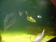 L'Aquarium de Talmont : un espace de biodiversité marine à découvrir