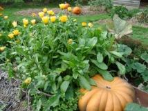 La santé par le jardin : alimentation, équilibre et plaisir ?