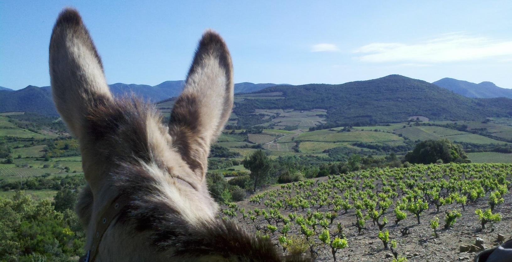 Randonner avec un âne : un tourisme authentique