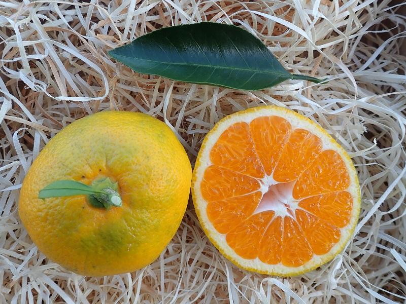 Végétal 85 ouvre ses portes les 20 & 21 octobre pour la visite de la pépinière aux 300 000 plantes avec des dégustations et des ateliers