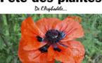 La 17ème fête des plantes de l'Asphodèle ce samedi 21 avril