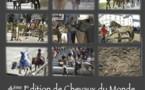 Chevaux du Monde au Haras de la Vendée les 8 et 9 septembre