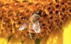 « Des abeilles et des hommes » Véronique Besse réagit