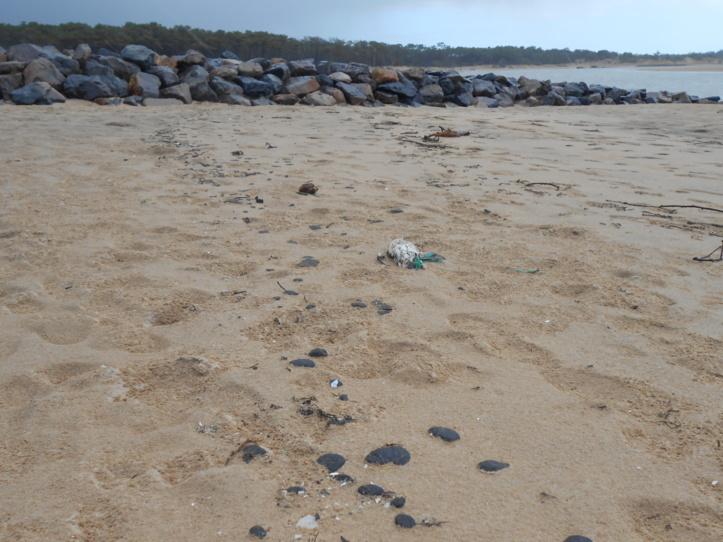 Des dizaines de boulettes d'hydrocarbure et d'oiseaux morts se trouvaient sur la plage du Veillon ce vendredi.