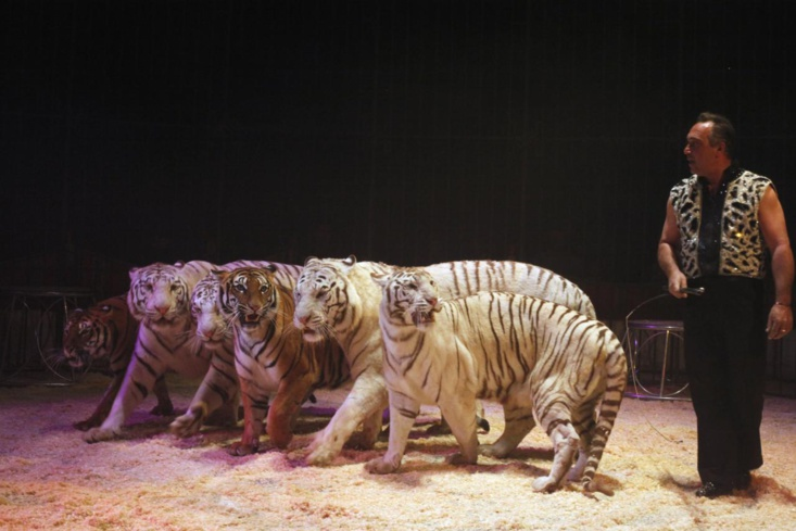 Le cirque Maximun  ce jeudi 4 août